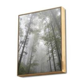 Energy Sistem Frame Speaker Forest