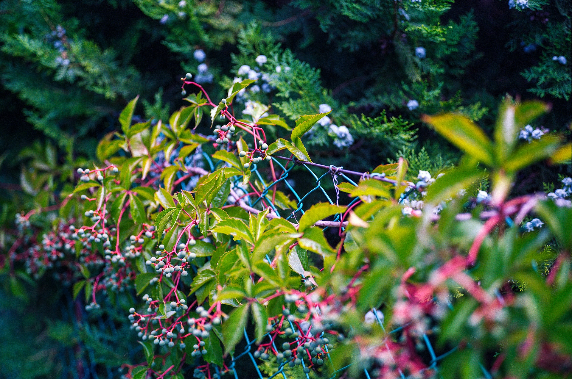 green-and-pink-leafy-plant-872474 1